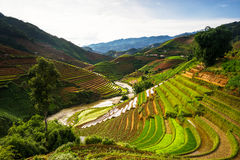 Rice fields on terraced in sunset at Mu Cang Chai, Yen Bai, Vietnam. Rice fields on terraced in rainny season at Mu Cang Chai, Yen Bai, Vietnam. Rice fields stock image