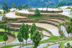 Rice fields on terraced in surice, Stock Photo