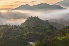 Rice fields on terraced in surice, Royalty Free Stock Images