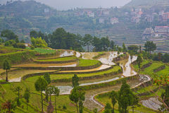 Rice fields on terraced at Wenzhou,China. The rice fields have been finished planting just at Wenzhou,China Royalty Free Stock Photos