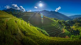 Rice fields on terraced with wooden pavilion on blue sky background in Mu Cang Chai, YenBai, Vietnam.