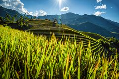 Rice fields on terraced with wooden pavilion on blue sky background in Mu Cang Chai, YenBai, Vietnam