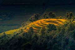 Rice fields on terraced with wooden pavilion at sunrise in Mu Ca