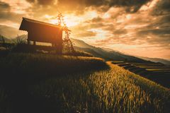 Rice fields on terraced with wooden pavilion at sunrise in Mu Ca royalty free stock photography