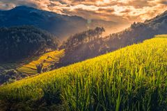 Rice fields on terraced with wooden pavilion at sunrise in Mu Cang Chai, YenBai, Vietnam