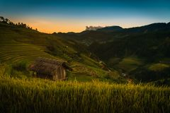 Rice fields on terraced with wooden pavilion at sunset in Mu Can stock photography