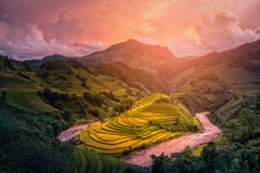 Rice fields on terraced with wooden pavilion at sunset in Mu Can