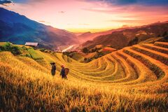 Rice fields on terraced with wooden pavilion at sunset in Mu Cang Chai, YenBai, Vietnam
