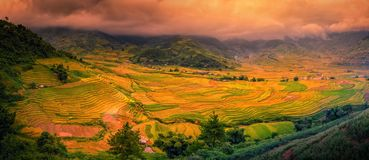 Rice fields on terraced with wooden pavilion at sunset in Sa Pa, YenBai, Vietnam.