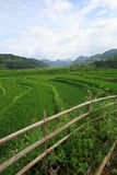 Rice fields on terraced of Xa Nam Bung, Vietnam Royalty Free Stock Photography