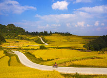 Rice fields on terraced of Guizhou mountains Royalty Free Stock Image