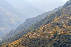 Rice fields on terraces in Himalaya, Nepal. Rural landscapes stock photography