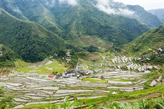 Rice fields terraces in Philippines Royalty Free Stock Photo