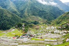 Rice fields terraces in Philippines Royalty Free Stock Photography