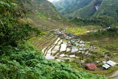 Rice fields terraces in Philippines Stock Image