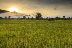 Rice fields in Thailand Stock Photos
