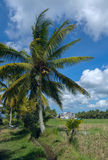 Rice fields at the town of Ubud Royalty Free Stock Images