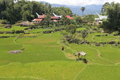 Rice fields and traditional houses in Tana Toraja, Sulewesi Royalty Free Stock Photography