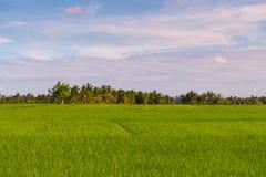 Rice fields in Ubud Stock Photos