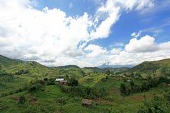 Rice Fields in Uganda, Africa Royalty Free Stock Image