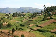 Rice Fields in Uganda, Africa Royalty Free Stock Photos