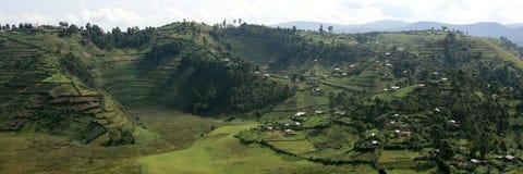 Rice Fields in Uganda, Africa Stock Image