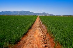 Rice fields in Valencia at Corbera mountains of Spain stock image