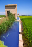 Rice fields in Valencia with irrigation and warehouse Royalty Free Stock Images