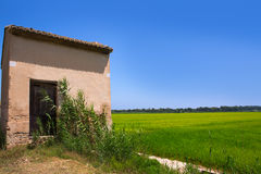 Rice fields in Valencia with warehouse Stock Photography
