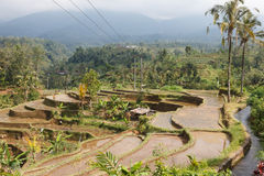 Rice fields in a valley at Bali Stock Photo