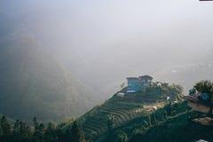 Rice fields in Vietnam stock image