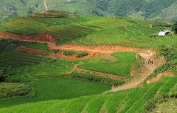 Rice fields in Vietnam Stock Photography