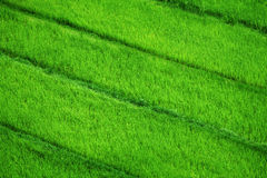 Rice fields. View from above Stock Images