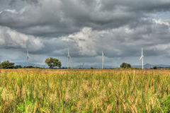 Rice Fields and Wind Turbines Stock Photos