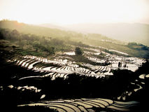 Rice fields Yuanyang China Stock Image