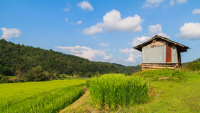 Rice fields with zinc cottage Royalty Free Stock Photo