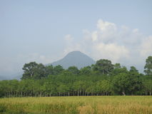 RICE FILD AND MOUNTAIN ON SOUTHERN OF THAILAND Royalty Free Stock Photography