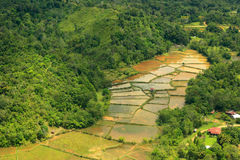 Rice filed and mountain of Borneo. (Aerial Shoot Royalty Free Stock Image