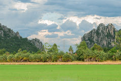 Rice filed with mountains and blue sky landscape. In Nakhonsawan province, Thailand stock image