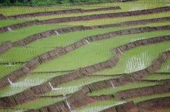 Rice filed terrace in harvest season. Royalty Free Stock Photo