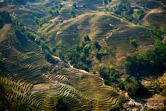 Rice filed terraces Stock Images