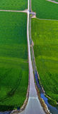 Rice fileds and road Flat Land Effect Stock Image