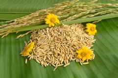 Rice and flower on green leaf. Background Stock Photo