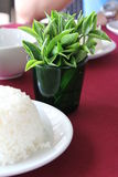 Rice with fresh tea leaves Royalty Free Stock Images