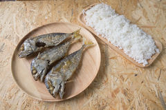 Rice with fried mackerel Royalty Free Stock Photography