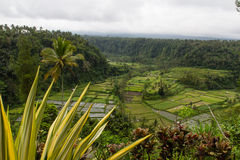 Rice and fruit plantations on Bali Stock Image