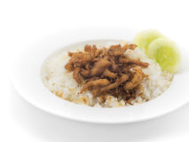 Rice with  garlic  chicken fried on white plate. Stock Photo