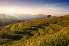 Rice gospodarstwa rolnego krajobraz na słońce połysku dniu zdjęcia stock