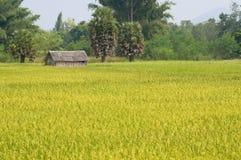 Rice gospodarstwo rolne Obraz Royalty Free