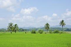 Rice gospodarstwo rolne czternaście Obrazy Stock